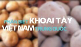 cách phân biệt khoai tây Đà Lạt và Trung Quốc